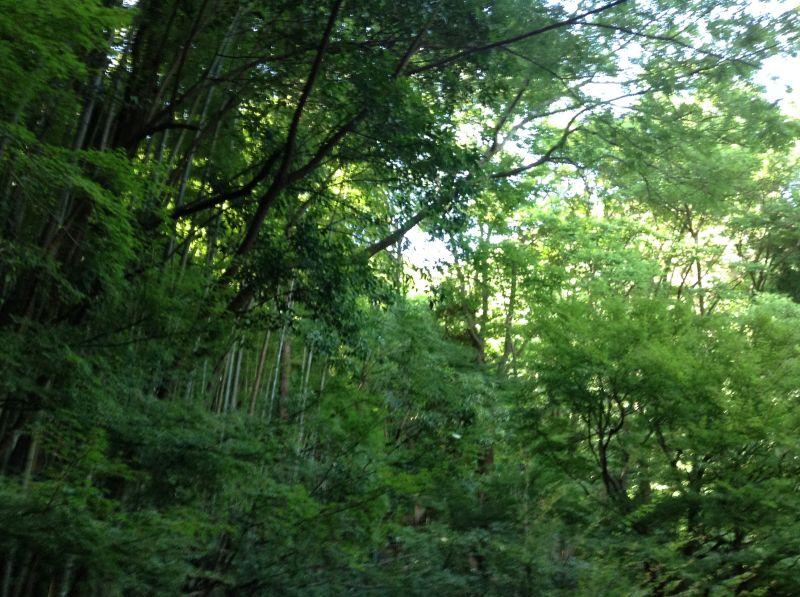 天王山の緑